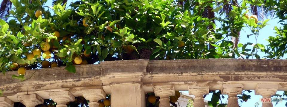Citronträdgård